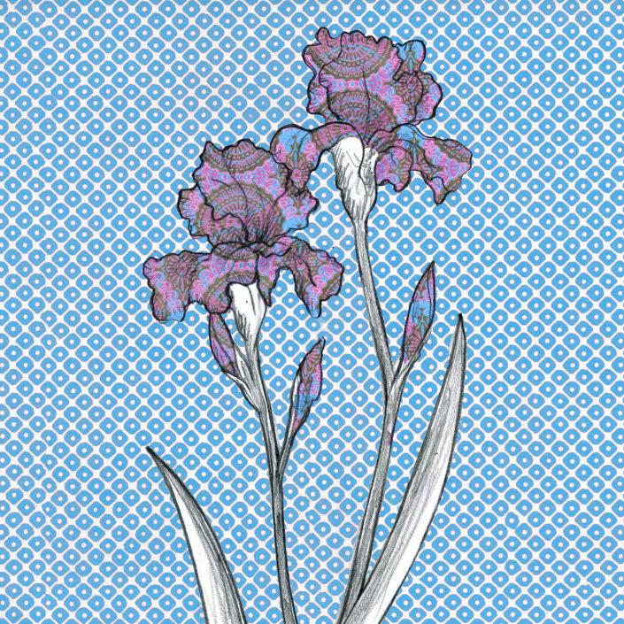 Iris, Grasse
