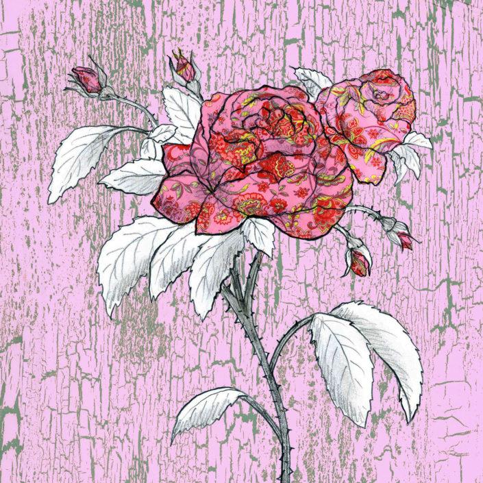 Rose, Grasse